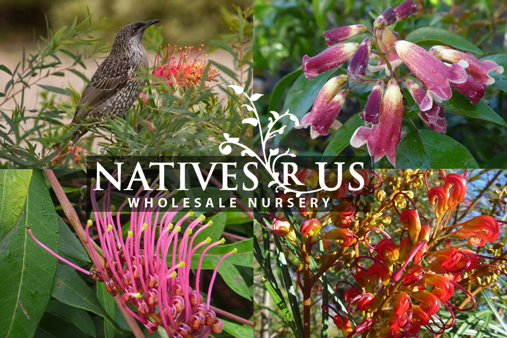 Natives plants and trees Gympie